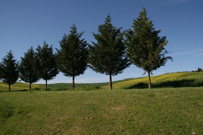 Agriturismo Bagnacci  foto 4