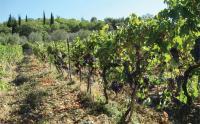 Agriturismo Monteraponi foto 8