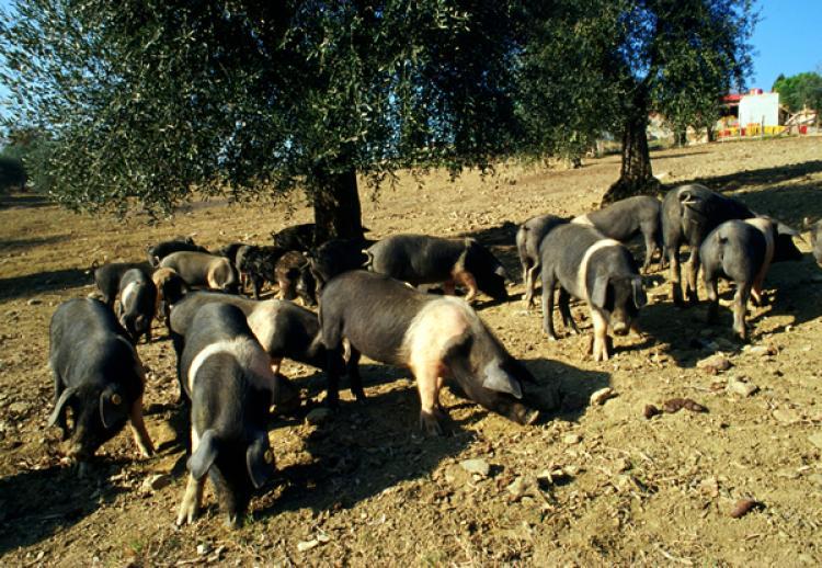 Agriturismo Massanera foto 4