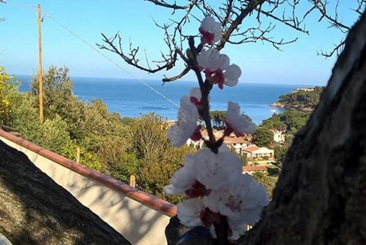 Elba Residence foto 3