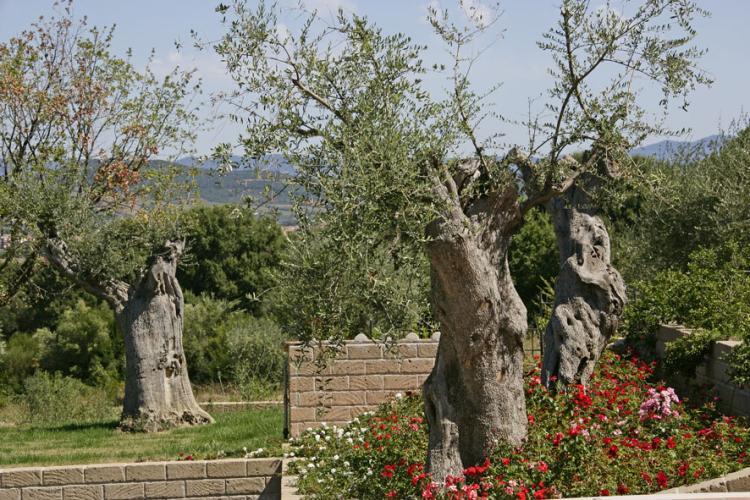 Borgo Etrusco foto 7