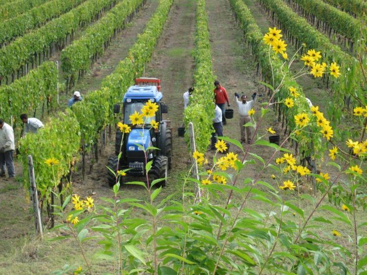 Azienda Agricola La Fornace foto 4